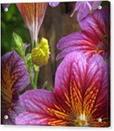 Purple Trumpets Acrylic Print
