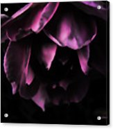 Purple Velvet Rose Acrylic Print