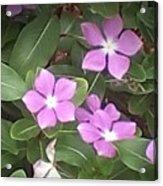 Purple Vintas Flower Photograph Acrylic Print