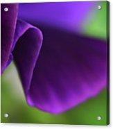 Purple Viola Wave Acrylic Print