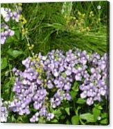 Purple Wall Acrylic Print