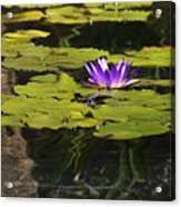 Purple Water Lilly Distortion Acrylic Print