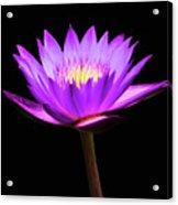 Purple Water Lily Flower Acrylic Print