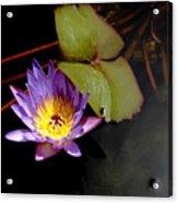 Purple Water Lily Acrylic Print