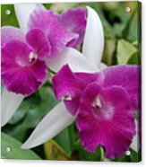 Purple White Orchids Acrylic Print