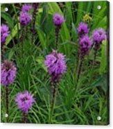 Purple Wildflowers Acrylic Print