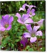 Purple Wildflowers Macro 2 Acrylic Print