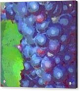 Purple Wine Grapes 2017 Acrylic Print