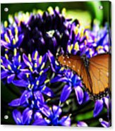 Purple World Acrylic Print