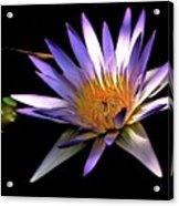 Purple Zen Acrylic Print
