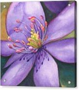 Purple's Passion Acrylic Print