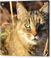 Purr-fect Kitty Cat Friend Acrylic Print