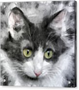A Cat With Green Eyes Acrylic Print