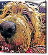 Puppy Wants To Cuddle Acrylic Print