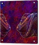 Python Snake Green Tree Python  Acrylic Print