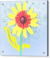 Quaint Little Daisy Acrylic Print