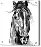 Quarter Horse Head Shot In Bic Pen Acrylic Print