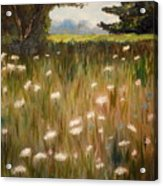 Queen Anne Lace Acrylic Print