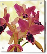 Queen Of Orchids Acrylic Print