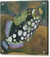 Queen Trigger Fish Acrylic Print