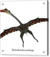 Quetzalcoatlus Flying Reptile With Font Acrylic Print
