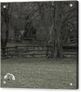 Quiet Afternoon Acrylic Print