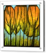 Quiet Blaze Acrylic Print