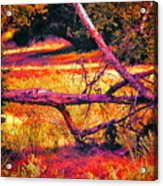 Quiet Meadow Acrylic Print