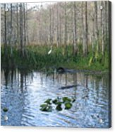Quiet Moment In The Glades Acrylic Print