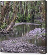 Quinault Rain Forest 3147 Acrylic Print