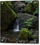 Quinault Washington Rain Forest Acrylic Print