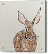 Rabbit 4 Acrylic Print