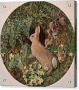 Rabbit Amid Ferns And Flowering Acrylic Print