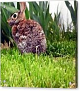 Rabbit As A Painting Acrylic Print
