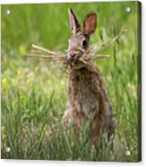 Rabbit Collector Square Acrylic Print