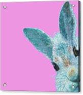 Rabbit Eyes Acrylic Print