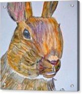 Rabbit Watercolor 15-01 Acrylic Print