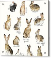 Rabbits And Hares Acrylic Print