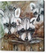 Raccoon Babies By Christine Lites Acrylic Print