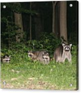 Raccoon Family Acrylic Print