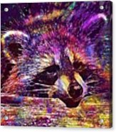 Raccoon Wild Animal Furry Mammal  Acrylic Print