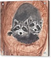 Raccoons Acrylic Print