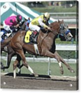 Race Horse Number 6 Acrylic Print