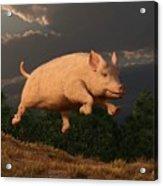 Racing Pig Acrylic Print