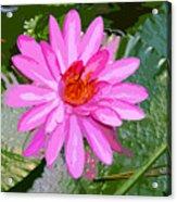 Radiant Pink Acrylic Print