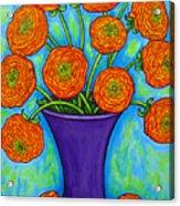 Radiant Ranunculus Acrylic Print
