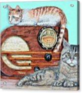 Radio Cats Acrylic Print by Chris Dreher