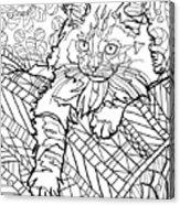 Ragdoll Kitten - Coloring Image Acrylic Print