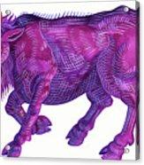 Raging Bull Taurus Acrylic Print
