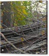 Rail Overgrowth Acrylic Print